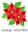 ポインセチア ベクター 植物のイラスト 45227845