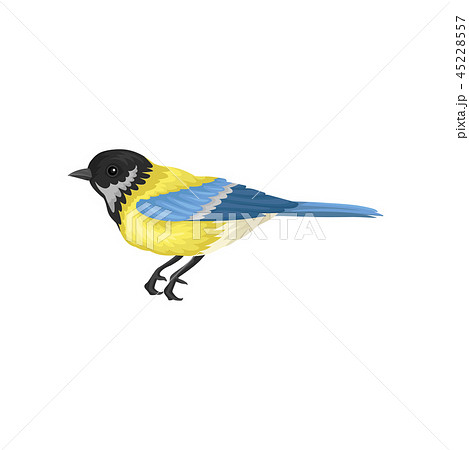 Tomtit with bright yellow and blue feathers. Small passerine bird. Fauna and wildlife theme. Flat 45228557
