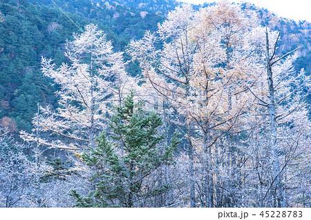 《長野県》秋の上高地・凍結した田代池《夜明け》 45228783