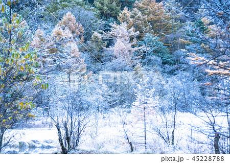 《長野県》秋の上高地・凍結した田代池《夜明け》 45228788
