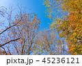 秋 紅葉 秋イメージの写真 45236121