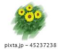 ひまわり 向日葵 45237238