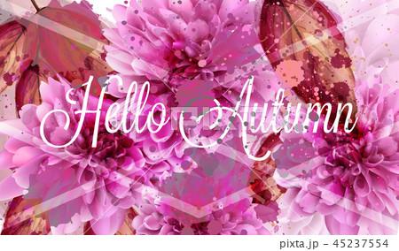 Hello autumn pink daisy flowers Vector banner 45237554
