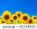 ひまわり・夏イメージ 45238025