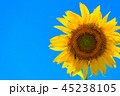 ひまわり 花 夏の写真 45238105