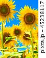 ひまわり ヒマワリ畑 花の写真 45238117