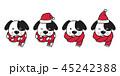 わんこ 犬 ベクトルのイラスト 45242388