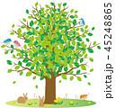 新緑 木 小動物 45248865