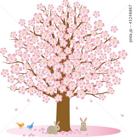 桜の木 小動物 45248867