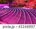 ライトアップ 寺院 萬松山の写真 45248997