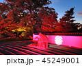 ライトアップ 寺院 萬松山の写真 45249001