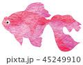金魚 魚 和のイラスト 45249910
