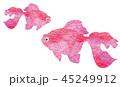 金魚 魚 和のイラスト 45249912