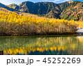 上高地 唐松 大正池の写真 45252269