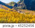 上高地 唐松 紅葉の写真 45252456