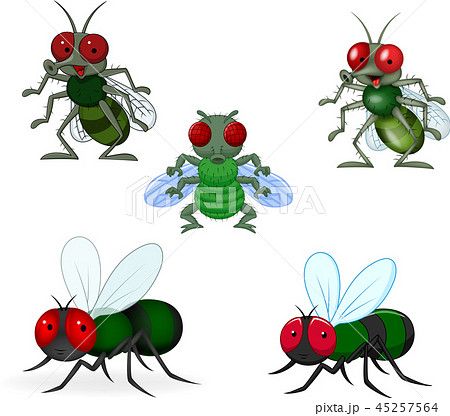 Cartoon green fly collection set 45257564