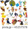 鳥 鶴 カラスのイラスト 45257578