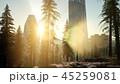 45259081