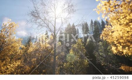 Sun Beams through Trees 45259098