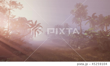 Sunset Beams through Palm Trees 45259104
