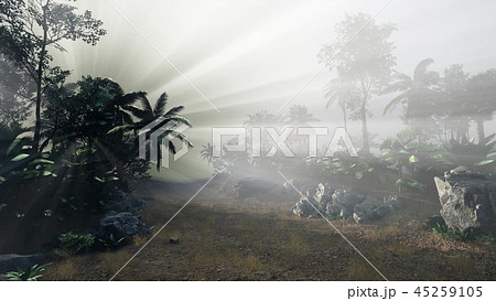Sunset Beams through Palm Trees 45259105