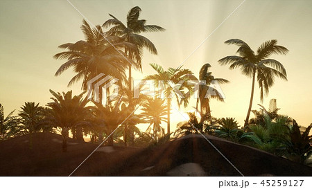 Sunset Beams through Palm Trees 45259127