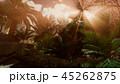 45262875