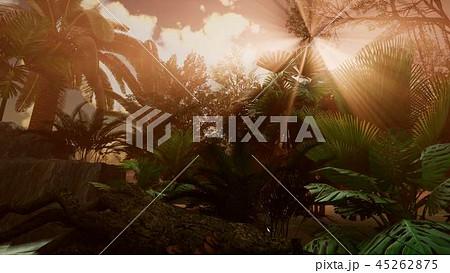 Sunset Beams through Palm Trees 45262875