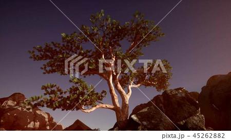 Sun Beams through Trees 45262882