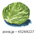 cabbage181108pix7 45269227
