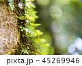 コケのクローズアップ ボルネオ島のジャングル 45269946