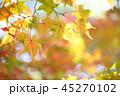 紅葉 もみじ 楓の写真 45270102