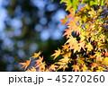 秋 紅葉 もみじの写真 45270260