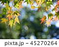 秋 紅葉 もみじの写真 45270264