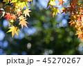 秋 紅葉 もみじの写真 45270267