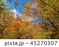 紅葉 秋 森林の写真 45270307