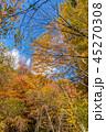 紅葉 秋 森林の写真 45270308