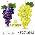 ぶどう ブドウ 葡萄のイラスト 45271648