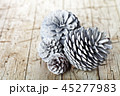 マツボックリ 松かさ 松毬の写真 45277983