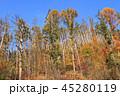 風景 自然 森林の写真 45280119