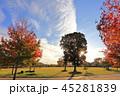 晴れ 風景 すじ雲の写真 45281839