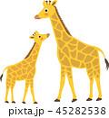 キリン 動物 親子のイラスト 45282538