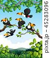 オオハシ科 シロムネオオハシ 自然のイラスト 45283096