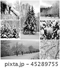 Winter forest beautiful, pines 45289755