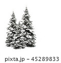 Pine trees isolated on white  45289833