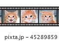Cute orange kitten with blue eyes 45289859