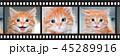 Cute orange kitten with blue eyes 45289916