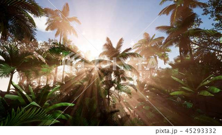 Sunset Beams through Palm Trees 45293332