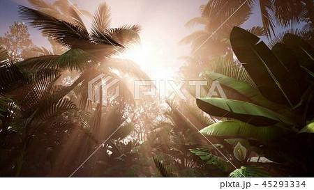 Sunset Beams through Palm Trees 45293334