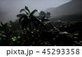 ヤシ 熱帯雨林 日差しのイラスト 45293358
